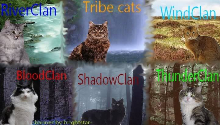 Warriors: Cats of All Clans Bannerimade4silvermist