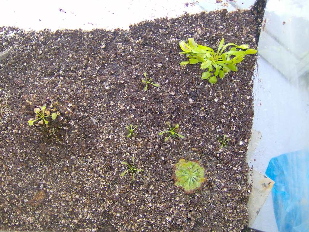 """Terrário do """"leaf"""" HPIM3315"""