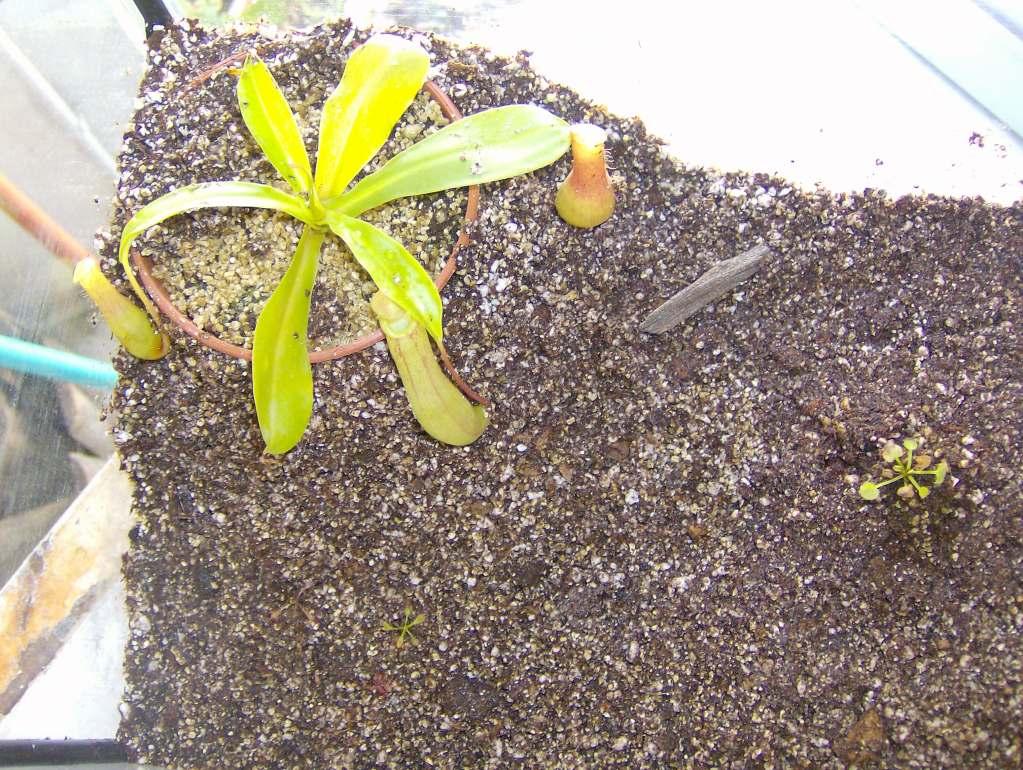 """Terrário do """"leaf"""" HPIM3316"""