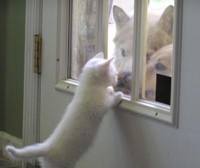 حيوانات اليفه روعه Catanddog