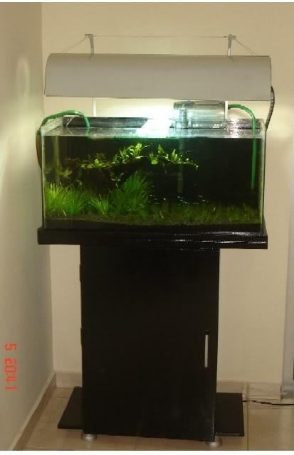 Symphysodon Garden Aquario01