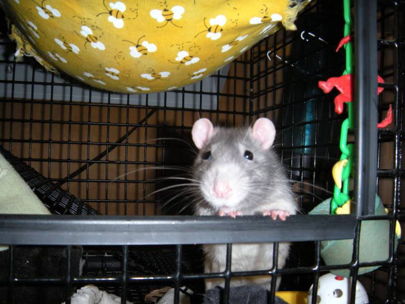 My Mischief! DSCN0495