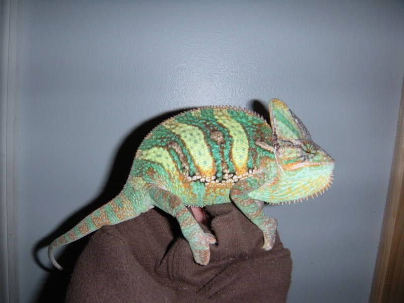 Anyone have Reptiles? Bleeker004