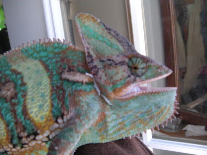 Anyone have Reptiles? Bleeker017