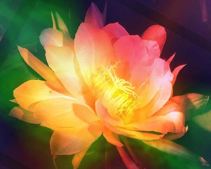 World Most Beautiful Flowers.rtf 483_zpsc7f94275
