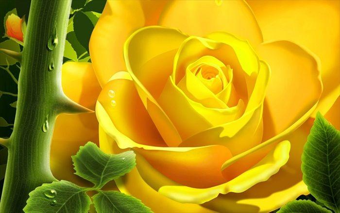 World Most Beautiful Flowers.rtf 485_zps69f27129