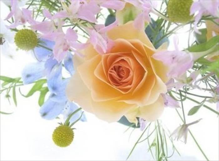 World Most Beautiful Flowers.rtf 487_zps8cabbffa