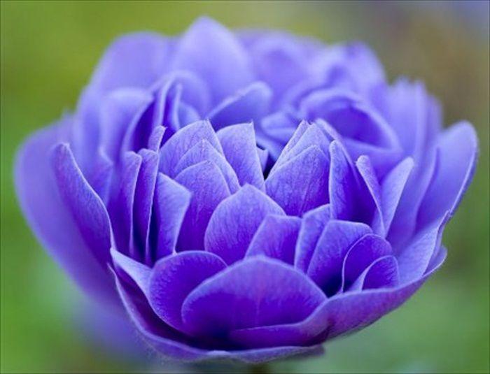 World Most Beautiful Flowers.rtf 488_zps210c910a