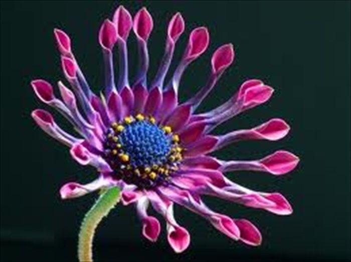 World Most Beautiful Flowers.rtf 489_zpsf6337d38