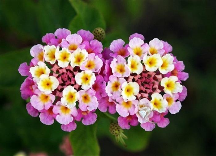 World Most Beautiful Flowers.rtf 490_zps92ac4f3c