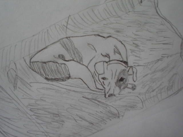 Felicity Resting on her blanket