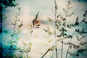 HEMINGWAY ; Clémence • French Touch 006yqfyy