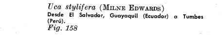 por que el cangrejo violinista no es reconosido un animal peruano 158-1