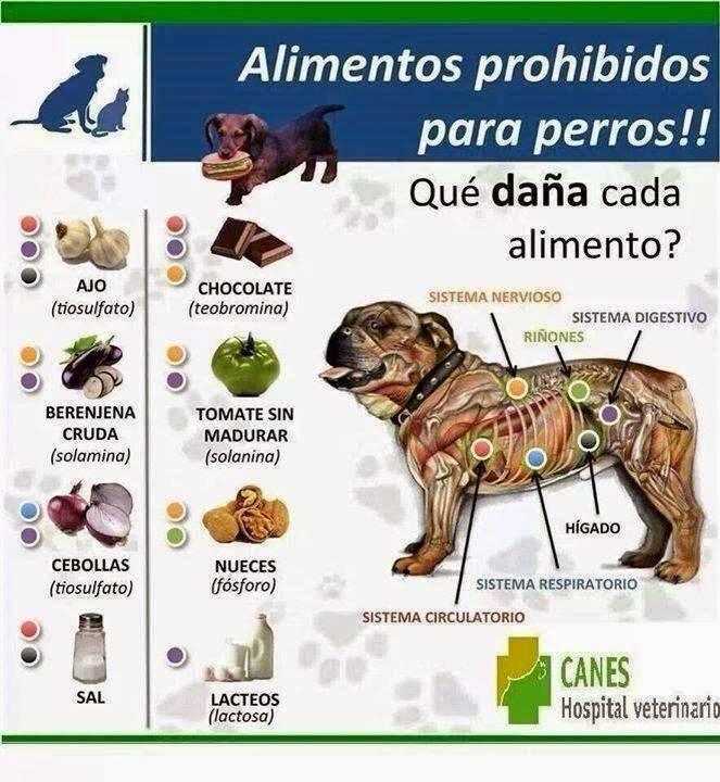 Alimentos prohíbidos para perros! Perro1