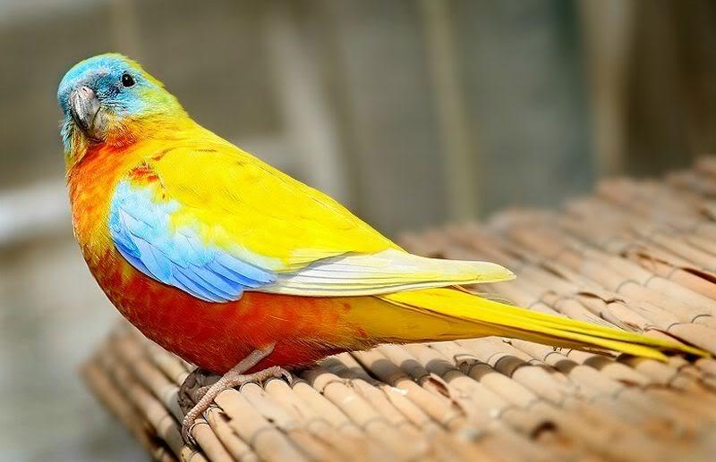 கவலை மறக்கும் காட்சிகள் அழகிய பறவைகள் சில.. - Page 4 Lovebirds