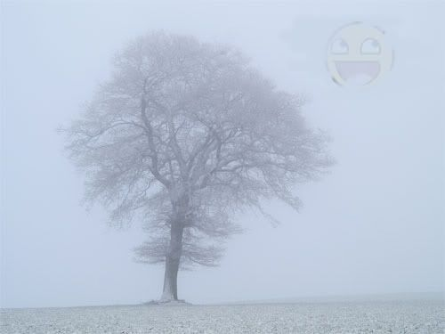 Add to the picture Tree-in-fog