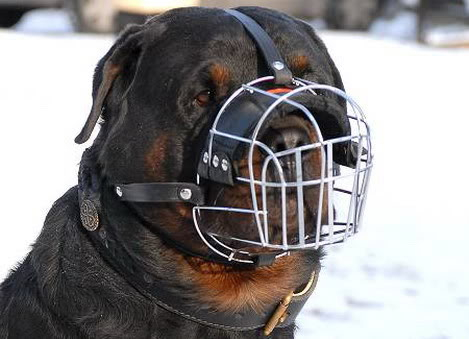Beautiful PurP|e Rottweiler-dog-muzzle-wire