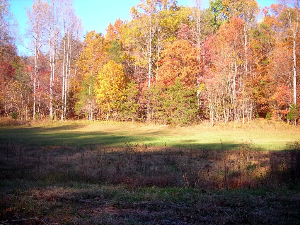 DSCN3450.jpg Neighbors land image by lookypics