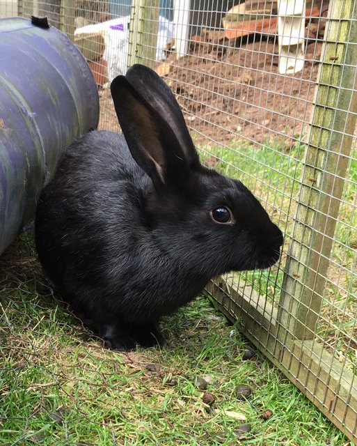 Litter of baby rabbits - Surrey Baby1_zpsj1yi28pm