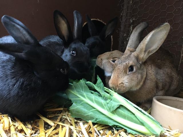 Litter of baby rabbits - Surrey Baby3_zpstfkcbehz