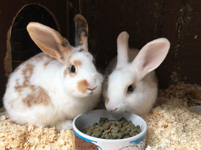 Bubble Gum and Jelly Bean - baby rabbits - Surrey  Bubblegumjellybean_zps3i7bvbbr