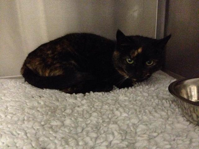 Chunks and Megan - Cats - Surrey  Cat2_zpsa1dceb3f