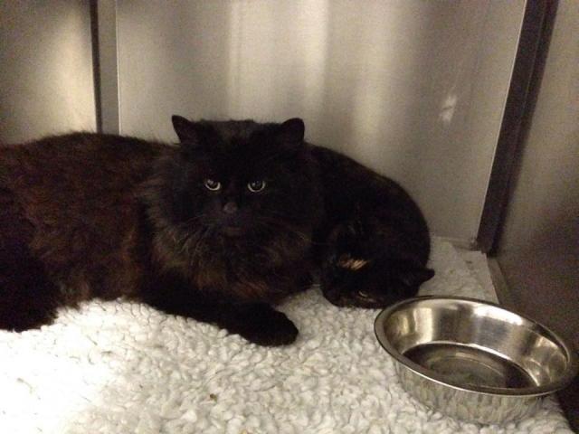 Chunks and Megan - Cats - Surrey  Cat_zps579f2b0f