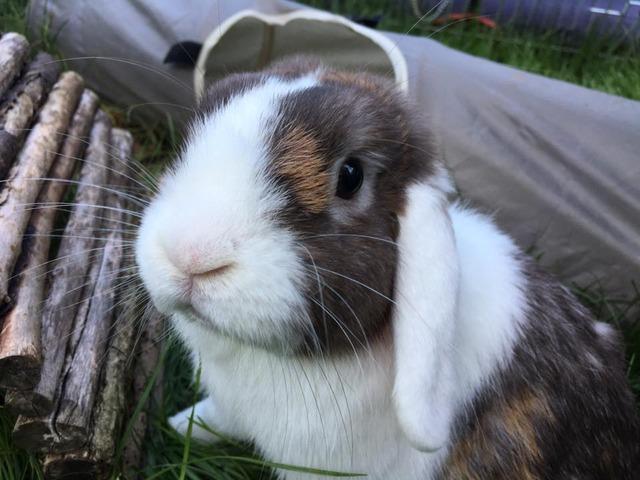 Jasper - tripod bunny - Surrey  Jasper3_zpswbztpne0