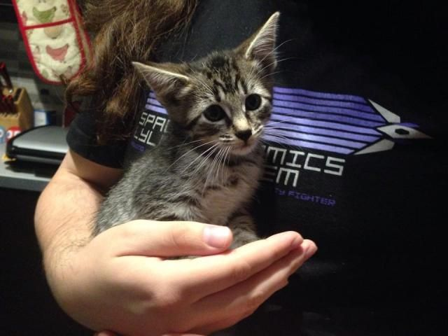 Missy cat and her kittens - Surrey Kit4_zpse9e3b89d