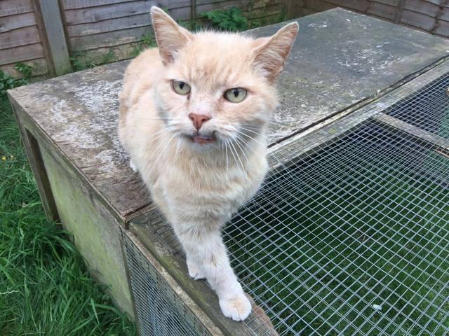 Sunny - male cat - Surrey  Sunny_zpsgefc82f2