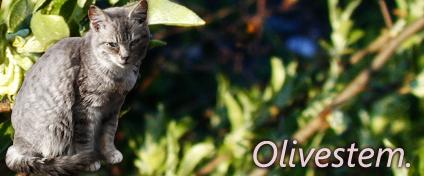 Signature Service~ [open!] [Pickup Stonetail and Olivestem!] Update! Olivestem