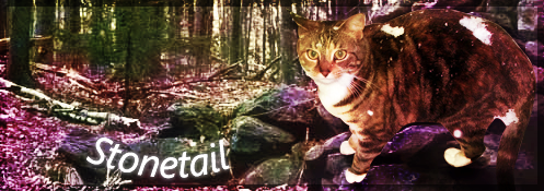 Signature Service~ [open!] [Pickup Stonetail and Olivestem!] Update! Stonetail