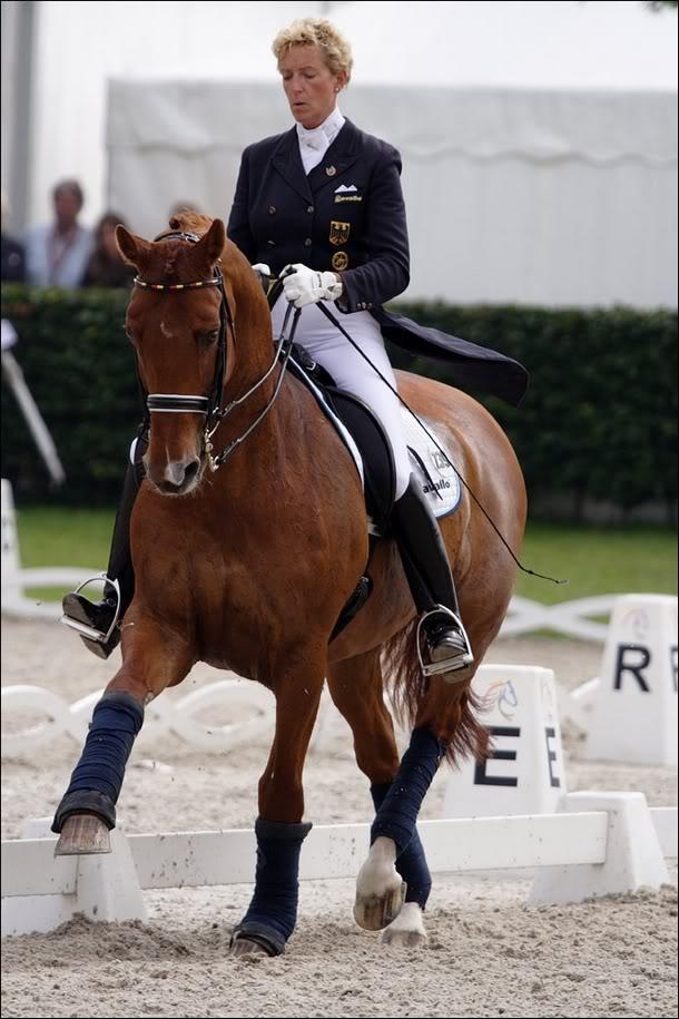Žydro stiliaus žirgas - Registracija 6824559