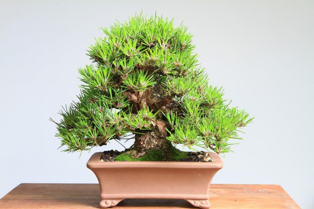Kuromatsu gan-seki-sho shohin D874ccfb-8182-481e-ac2d-4a57762fa6c2_zpsef4ba978