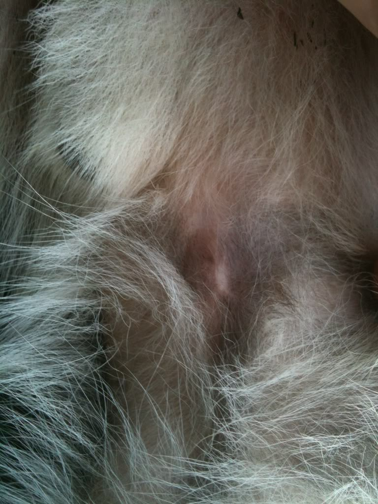Bald spot on chest + Umbilical Hernia? 75e7abd3