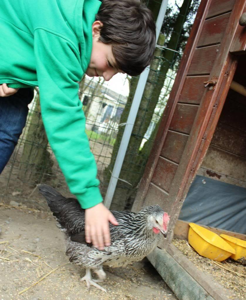 Poules, lapine et canards  05-13023_zps76ff3bb7