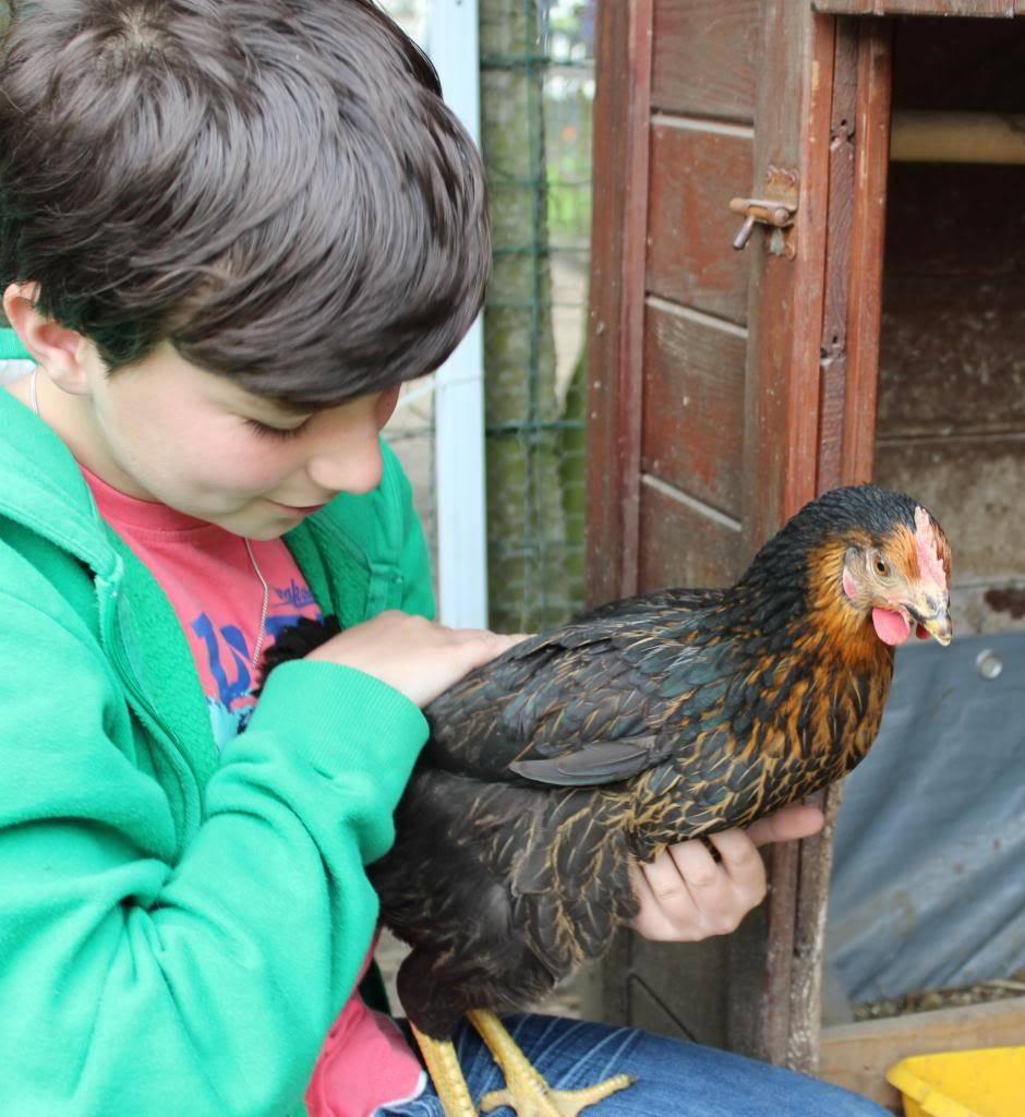 Poules, lapine et canards  05-13025_zpsee9822d5