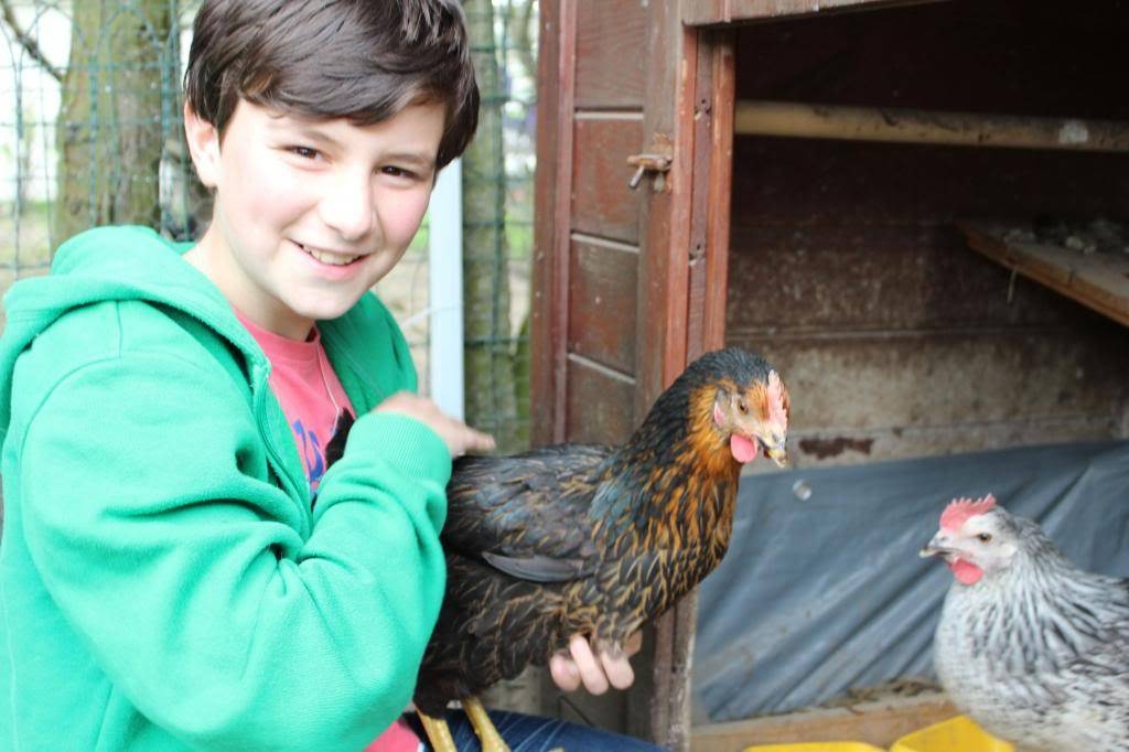 Poules, lapine et canards  05-13026_zps7ffc7973
