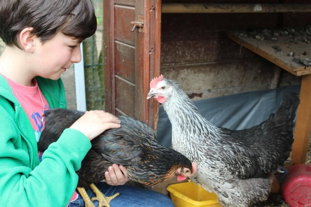 Poules, lapine et canards  05-13027_zps6eeb1cd9