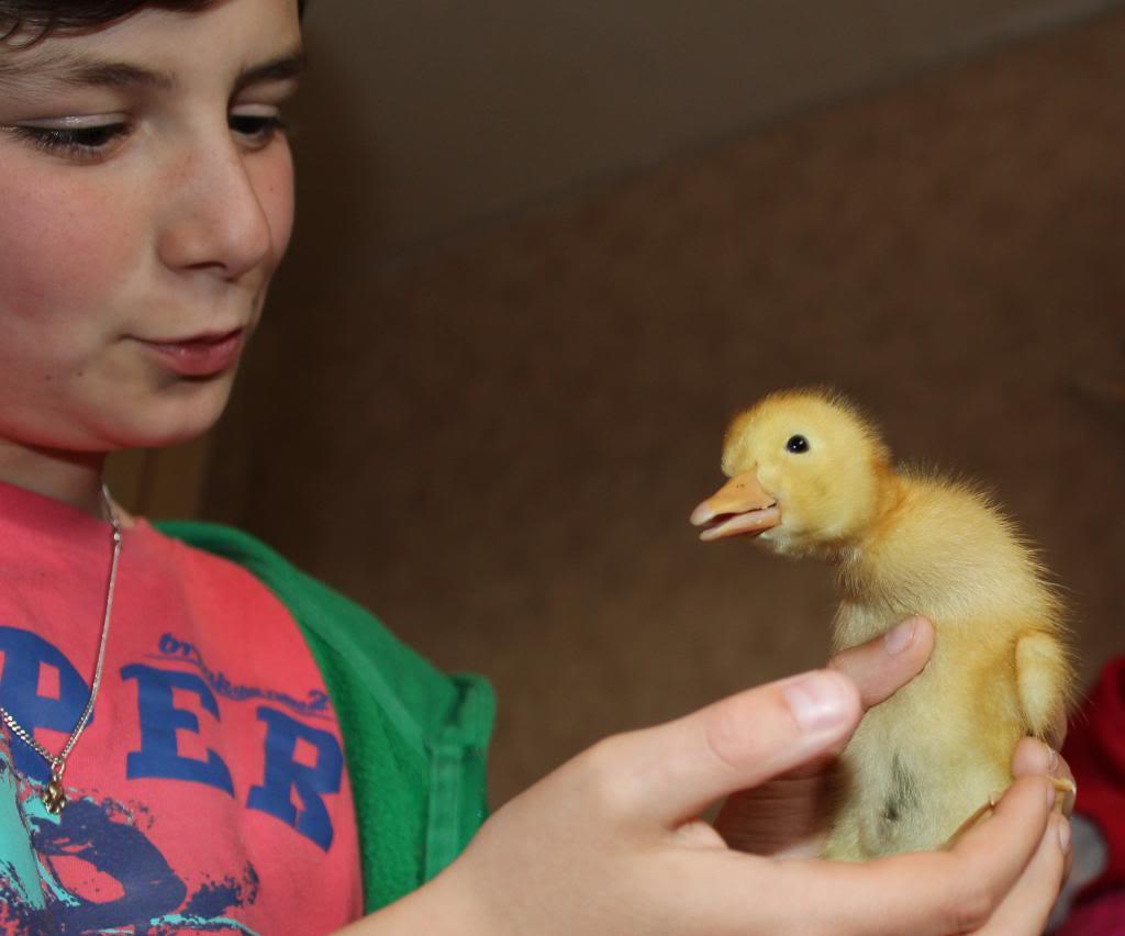 Poules, lapine et canards  05-13066_zps5fd74d08