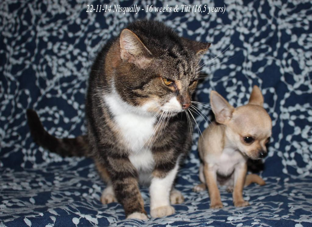 Titi et Pomme , mes chats IMG_0904_zpsc27a4bac
