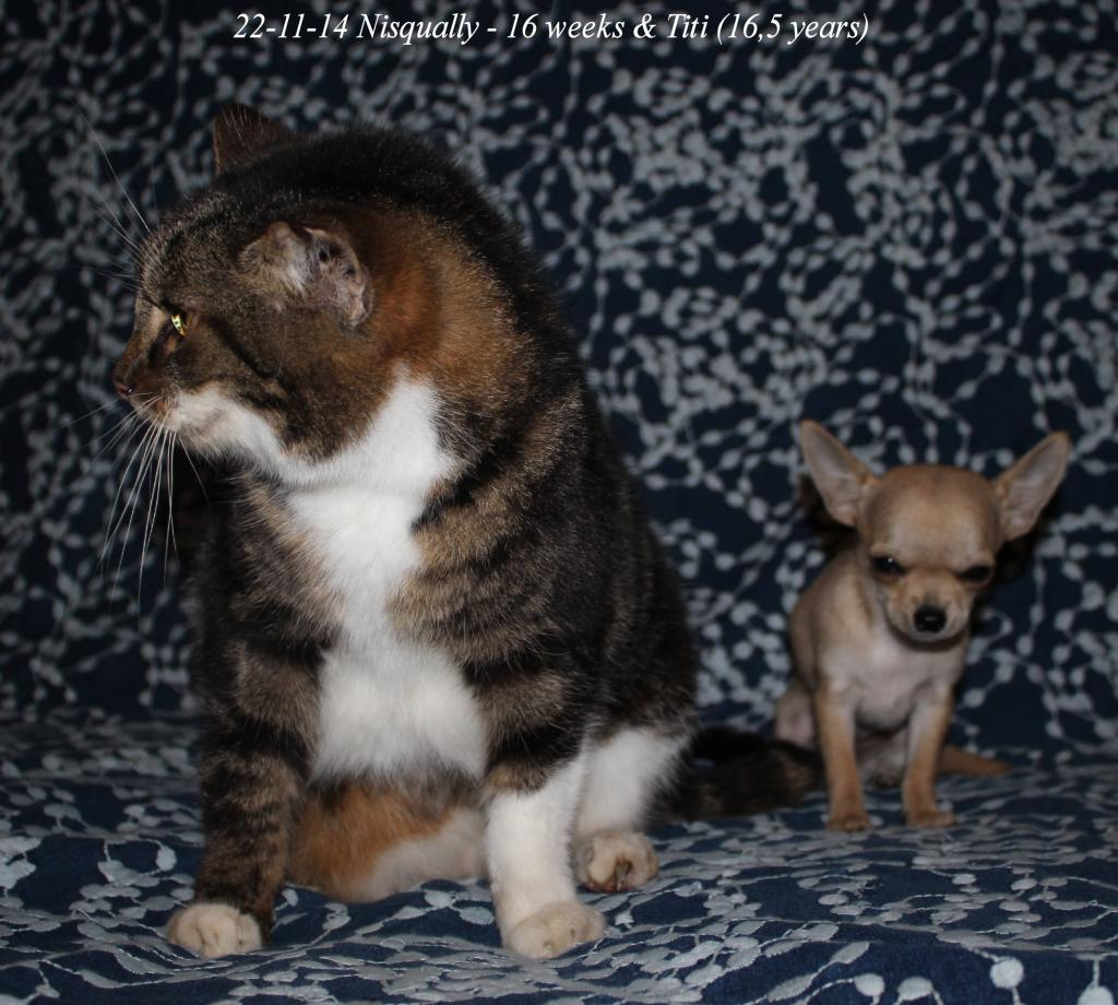 Titi et Pomme , mes chats IMG_0907_zpsaab02269