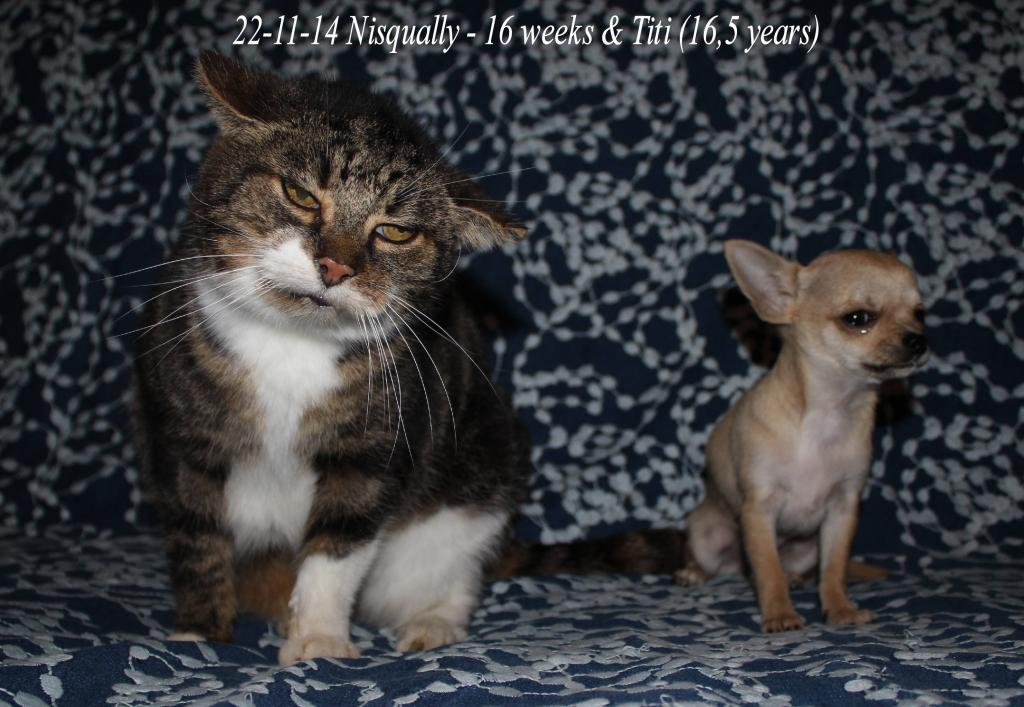 Titi et Pomme , mes chats IMG_0908_zps498702ab