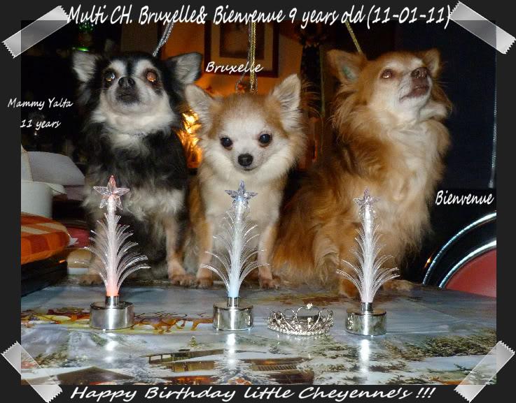 Soeurettes Bruxelle & Bienvenue  15 ans - Page 2 11-01-2011B-dayBXLVenutje291c