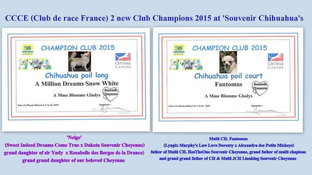 Neige et Fantomas Champions club CCCE France 2015 Fanto%20amp%20Neige%20ch%20club%202015_zpsf6qujwuc