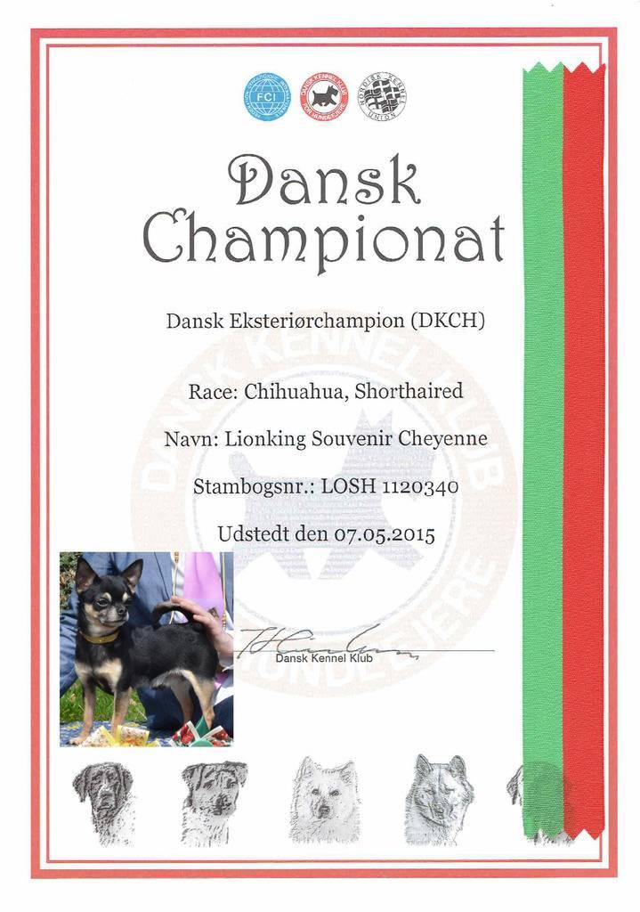 LionKing champion Danemark 2015 Lion%20Dansk%20Champion%20TO%20POST_zpsafjpdwy6