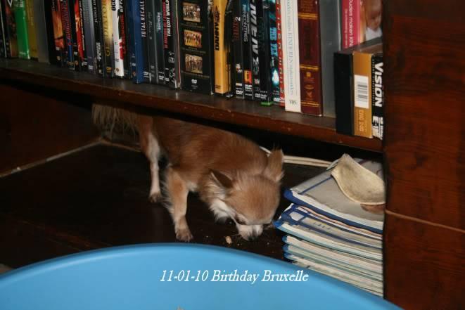 Soeurettes Bruxelle & Bienvenue  15 ans - Page 2 14-01-10naissanceBBsFlashXOne016