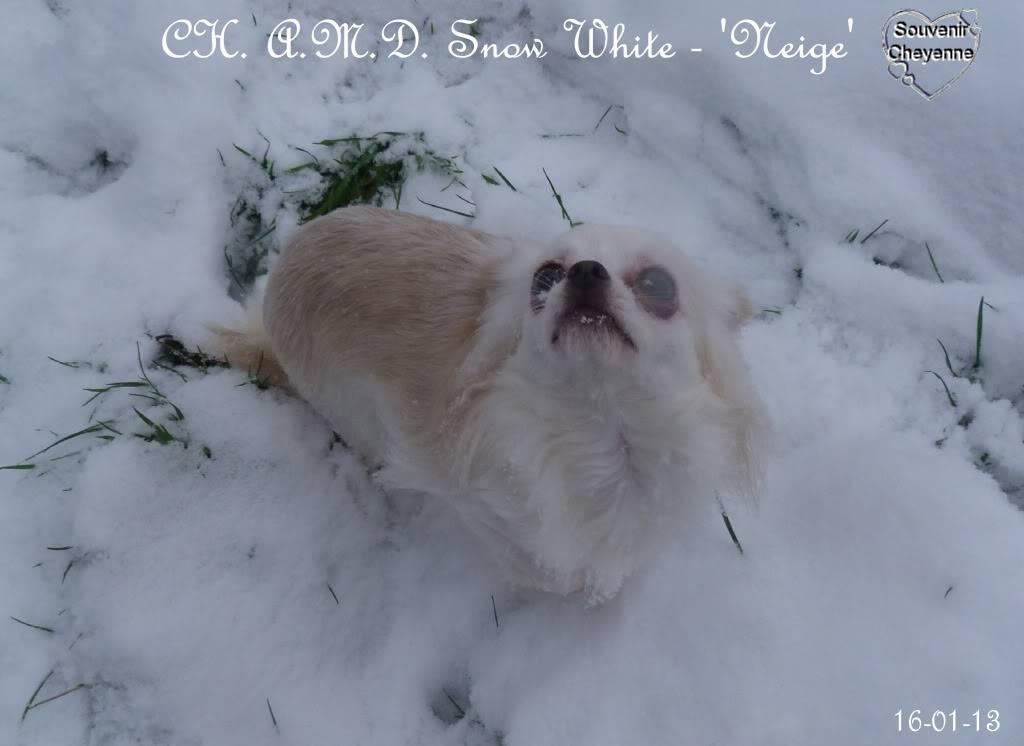 Snow White dite Neige - Page 4 16-01-13SNOW213