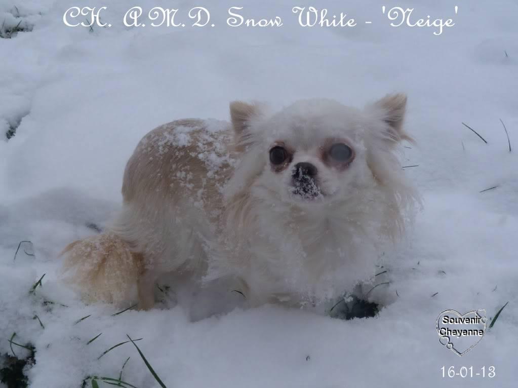 Snow White dite Neige - Page 4 16-01-13SNOW216
