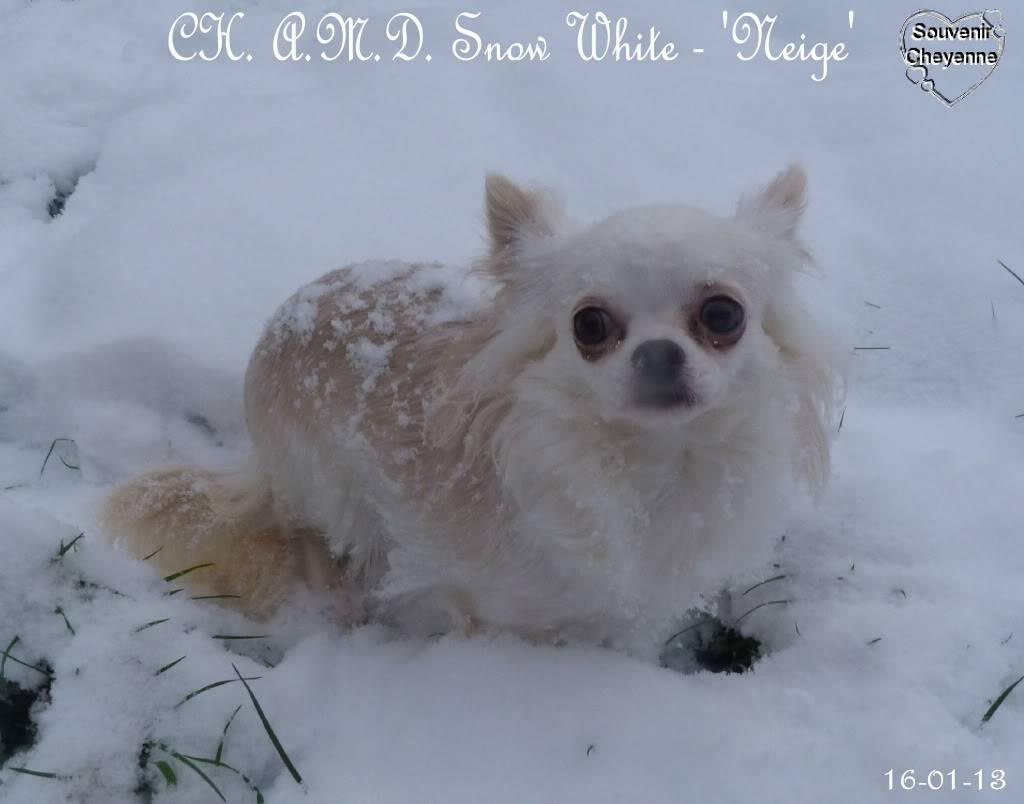 Snow White dite Neige - Page 4 16-01-13SNOW218